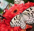 2 Fun Facts about Butterflies for Kids