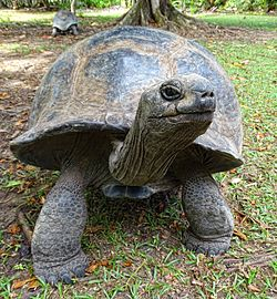 What is the Differences Between the Turtle and Tortoise?