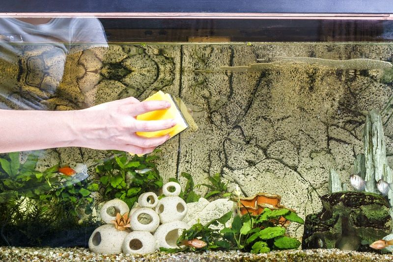 7 Easy Ways to Clean your Fish Tanks