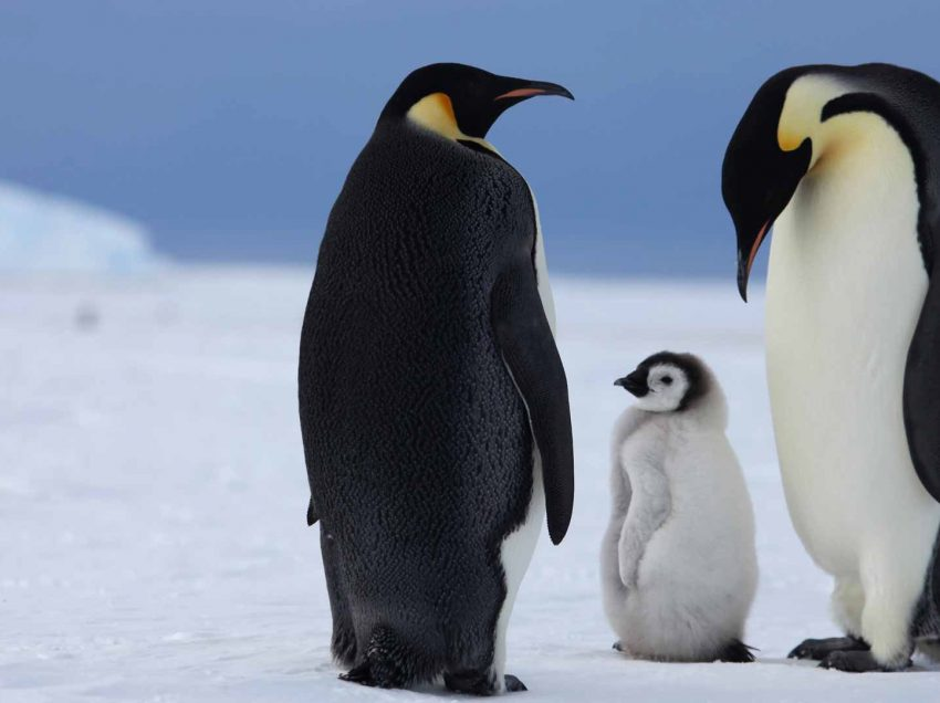 Meet and Greet the Real Life Penguin Species of Happy Feet Movie Characters