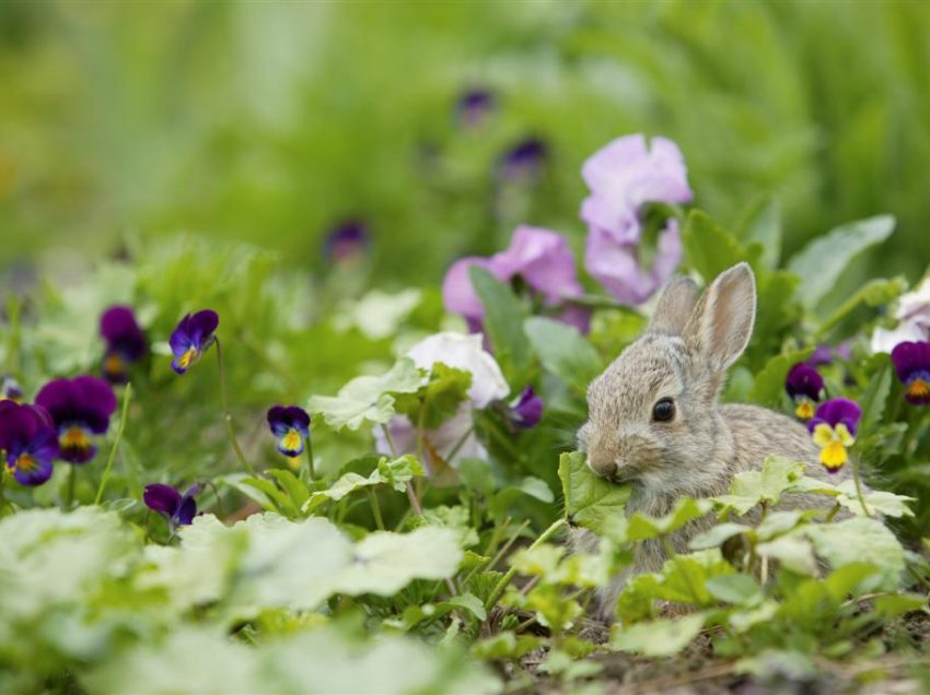 Do You Have to Hate a Rabbit in Your Garden? Here are 2 Kind Things to Do