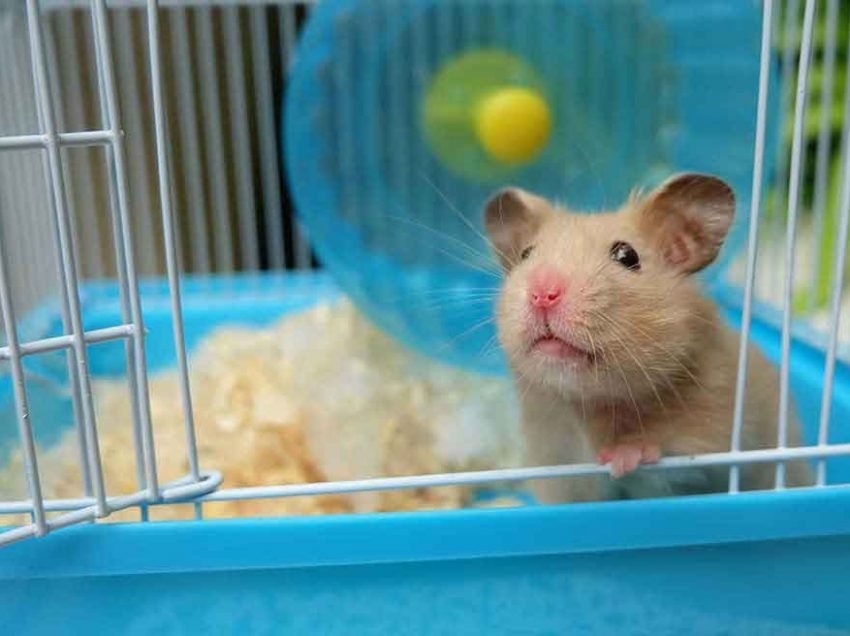 How to Build Your Own Hamster Cage