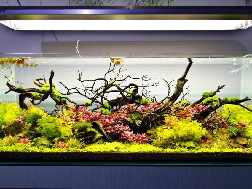 Before you Build your Fish Empire, Get Inspired from these Aquarium Designs