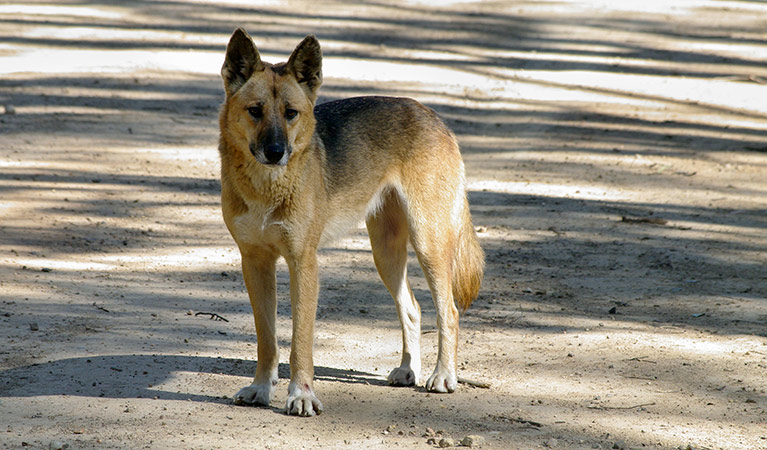 7 Ways on How to Train Wild Dog to be Smarter
