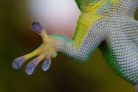 Ever Wonder How Gecko Stick On The Wall? We'll Tell You