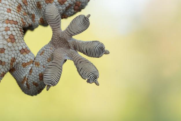 Nanotechnology For The Sticky Feet Of Geckos: Cool Stuff