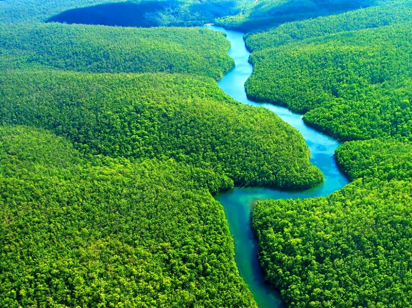 List of Wild Animals That Live In The Amazon Forest