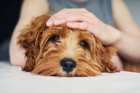 How To Care About Dog Seizure