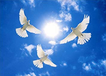 Why Doves Considered A Symbol Of Peace? A Little History Lesson