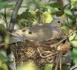 Nesting Material for Doves: Make them Feel at Home