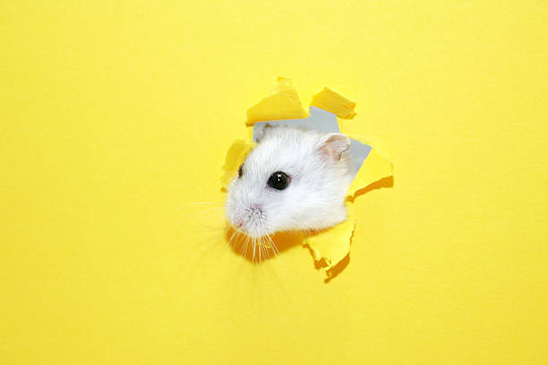 Hamster lovers! Is it Worth to Join the Hamsters Online Community?