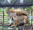 3 Kinds of Squirrel Traps which is Safe to Use