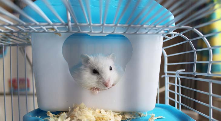 7 Ways on How to Keep Hamster Odorless