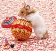 7 Ways on How to Invite Hamsters to Play