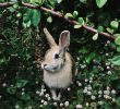How to Care for Wild Rabbit as A Pet