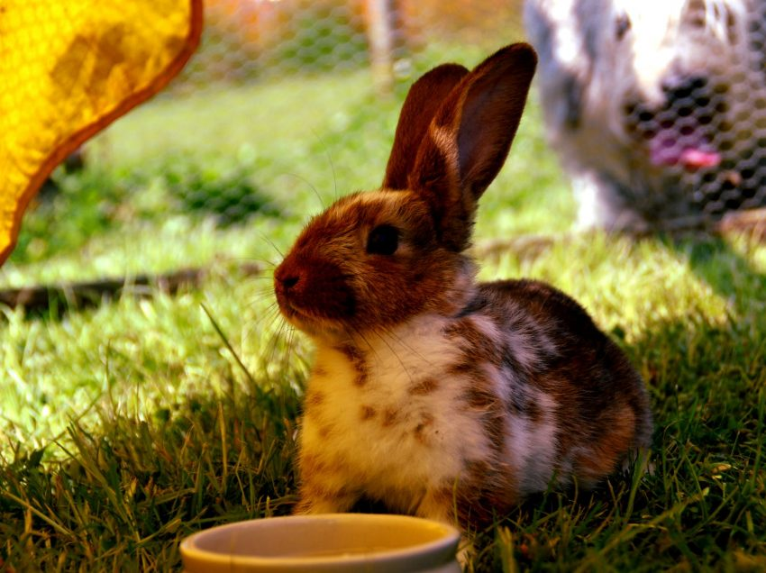 What is Specific Nutrition that Should be Included in Rabbit Food?