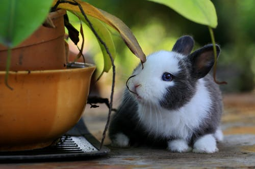 5 Kinds of Baby Rabbits which May be Traded