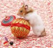 The Importance of Toys for Hamster