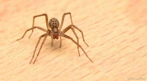 4 Types of House Spider and The Benefits