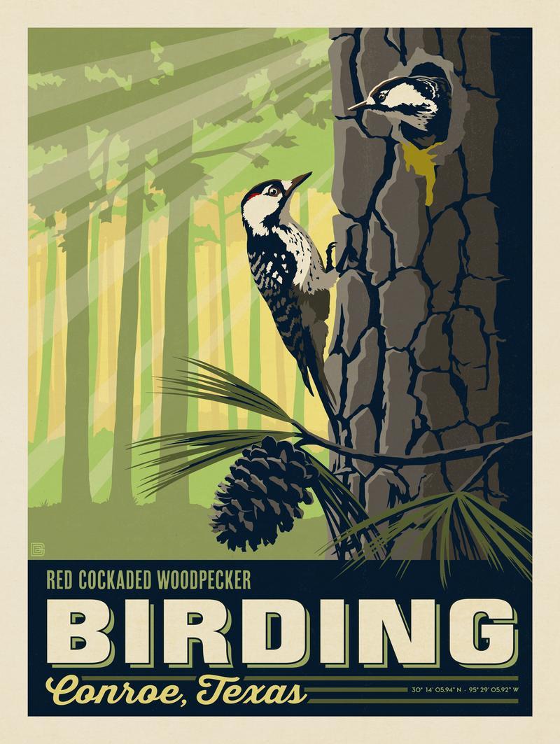 Conroe, TX: Birding