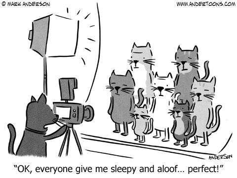 Cat Cartoons & Comics