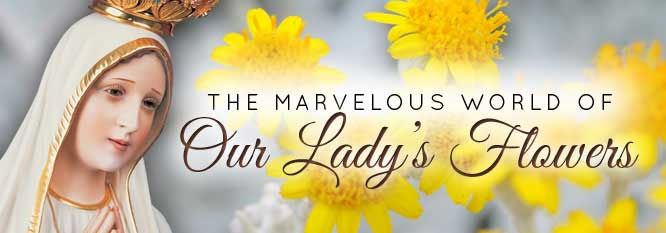 Header-The Marvelous World of Our Lady's Flowers