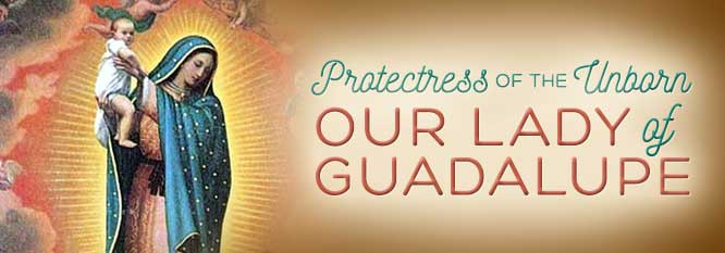 Header - Our Lady of Guadalupe, Protectress of the unborn