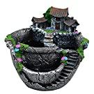 Mini Fairy Garden Flower Plants