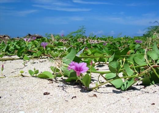 Eye-catching purple wild flowers on the shore of Lakawon Island.