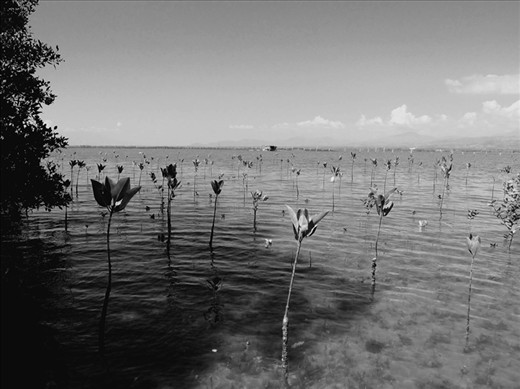 A mangrove reforestation project in Ilog, Philippines brings new life to the sea