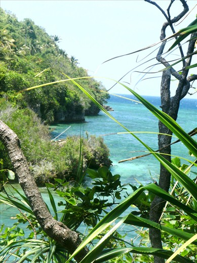 Through thick vegetation, the hilltop view shows the rocky coast of Danjugan.