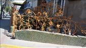 Withered flower railing: by 7dayadventurer, Views[1155]