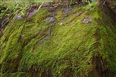 Moss garden.: by BigTripBlog, Views[620]