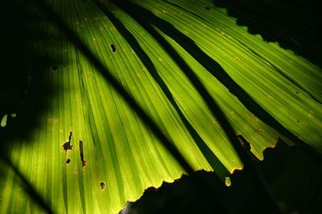 Dark shadows cast over a rainforest palm frond.