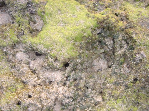 Part of the coral reef.  It was covered in green moss/lichen.