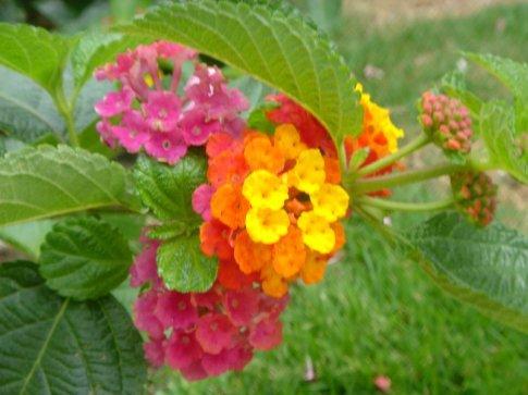 The bright colors of this flower along my stroll made me happy!  Hope it does the same for you!