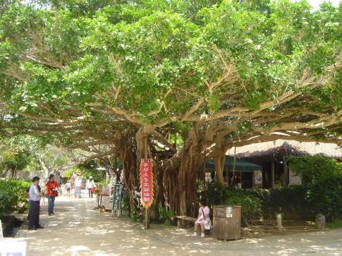 Awesome tree at the entrance to the Kingdom (traditional crafts) Village.