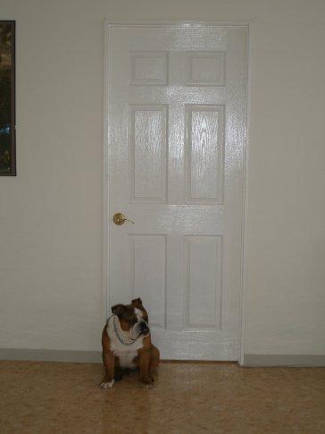 Waiting by the door...