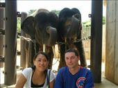 Megumi, Roger, and their two new elephant friends!  Smile!: by abcarlson, Views[513]
