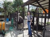 Arielle posing with the ostrich-with-an-attitude.  : by abcarlson, Views[327]