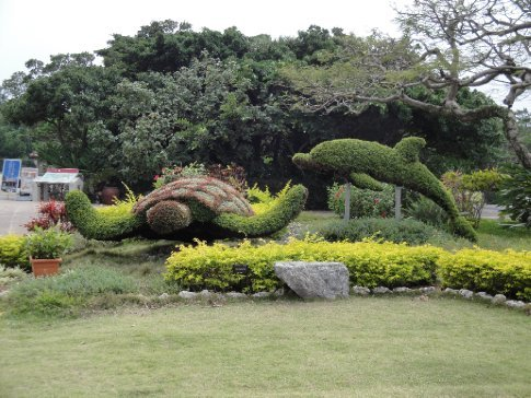 Turtle and dolphin topiary.