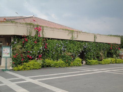 The flowers hanging off the visitors' center at the Ocean Expo Park are all in bloom again!