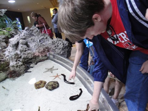 At the aquarium petting tank, you are encouraged to touch starfish.