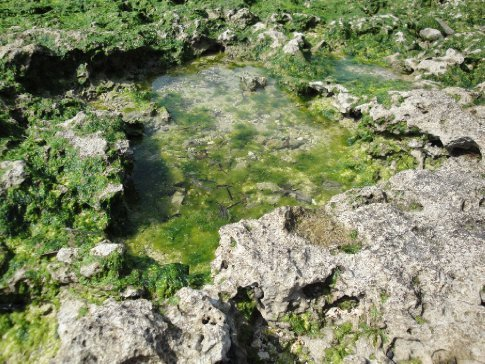 I love all the tidal pools made by the coral.  It's fun to see the mini ecosystems up close.