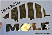 Like a Rolling Mole.  http://www.moletheworld.com/: by acrossourworld, Views[210]