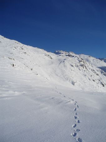 My tracks on my way down from the top.