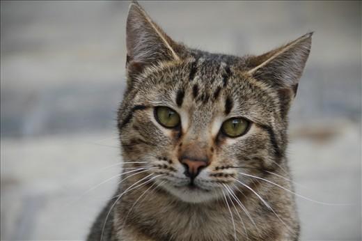 Cattie Look
