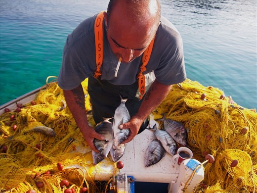 scholarship entry_Local fisherman Vasilis Travaris catch for local restaurants