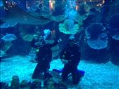 Me and my son in the Dubai Mall Aquarium. I'm looking trim, he opts for cool.: by adrian, Views[43]