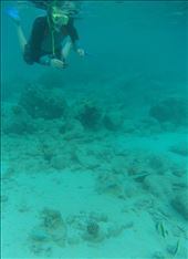 Dave snorkelling with a Long Tom fish.  Iboih, Sabang.  (Pulau Weh).: by adventurers, Views[462]